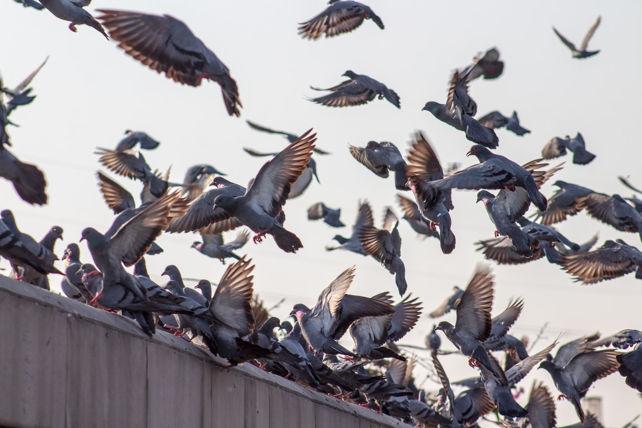 Schrems II - Putting a Privacy Shield cat amongst the Data Protection Pigeons!
